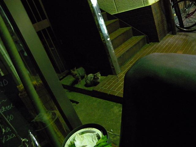夜猫_e0089232_21265816.jpg