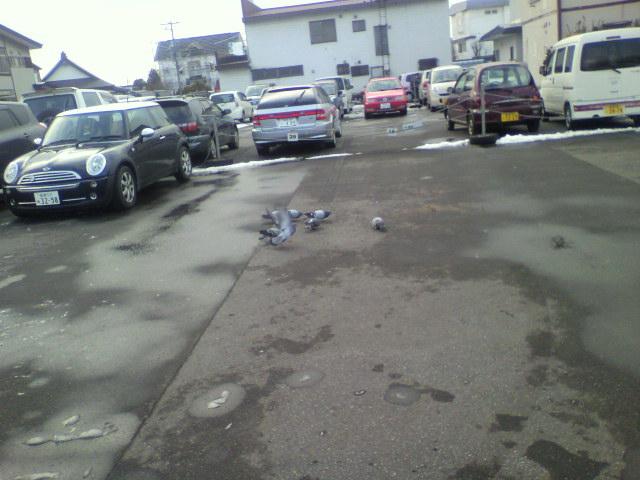 駐車場のハト_b0106766_065688.jpg