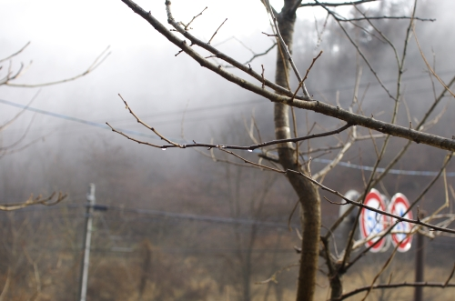 霧の朝_c0110869_1143658.jpg