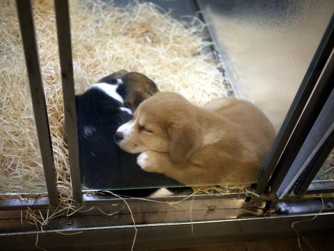 フランス滞在許可証更新&ペットショップの子犬たち_c0090198_4141221.jpg