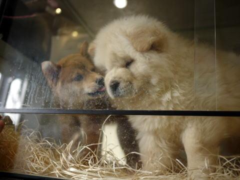 フランス滞在許可証更新&ペットショップの子犬たち_c0090198_454258.jpg