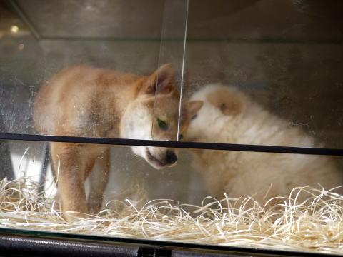 フランス滞在許可証更新&ペットショップの子犬たち_c0090198_464113.jpg