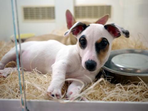 フランス滞在許可証更新&ペットショップの子犬たち_c0090198_47932.jpg