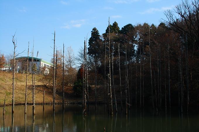 都立小山内裏公園 冬景色 後編_e0165983_10353410.jpg
