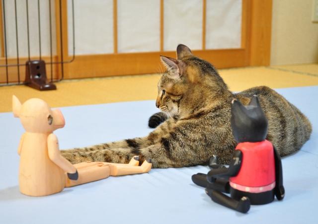 黒猫ミミの怒り_a0126590_75622.jpg