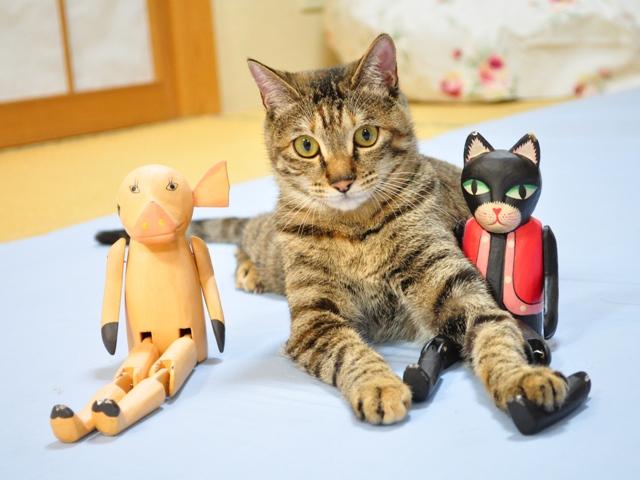 黒猫ミミの怒り_a0126590_812310.jpg