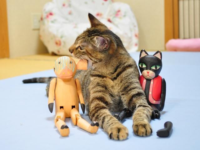 黒猫ミミの怒り_a0126590_854479.jpg