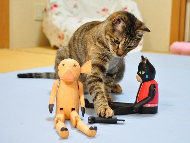 黒猫ミミの怒り_a0126590_871243.jpg