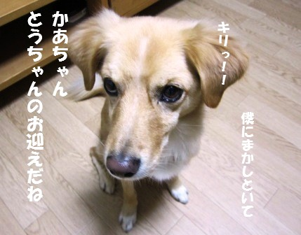 c0196992_01761.jpg