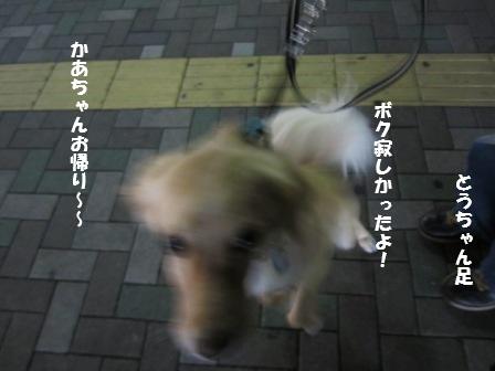 c0196992_0292497.jpg