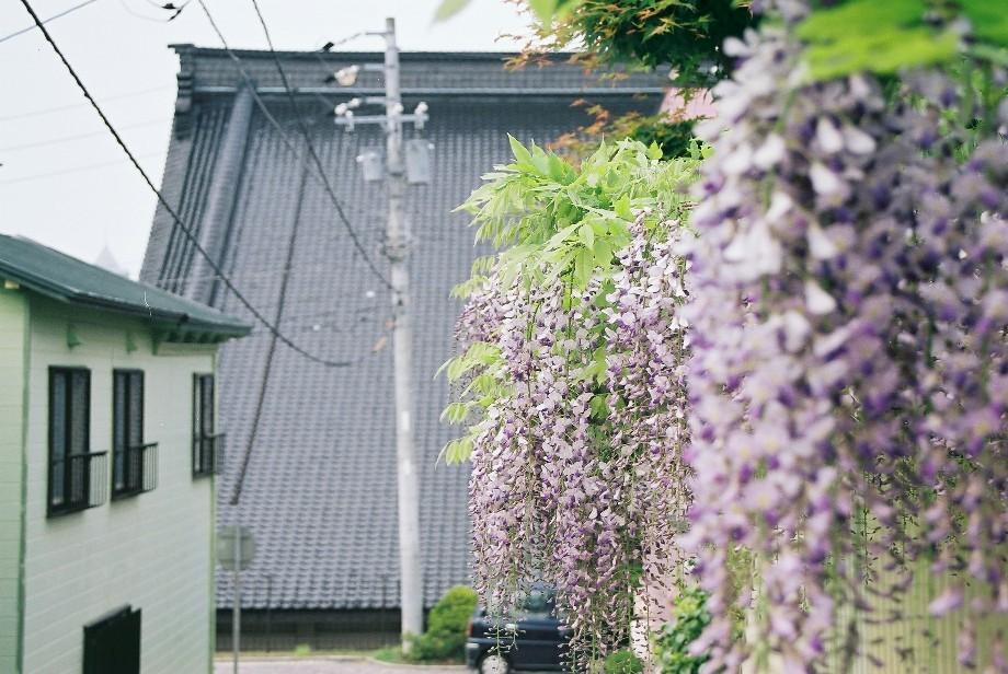 今年の函館写真(夏、その1)_a0158797_2214535.jpg