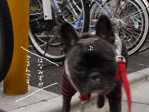 b0134197_07347.jpg