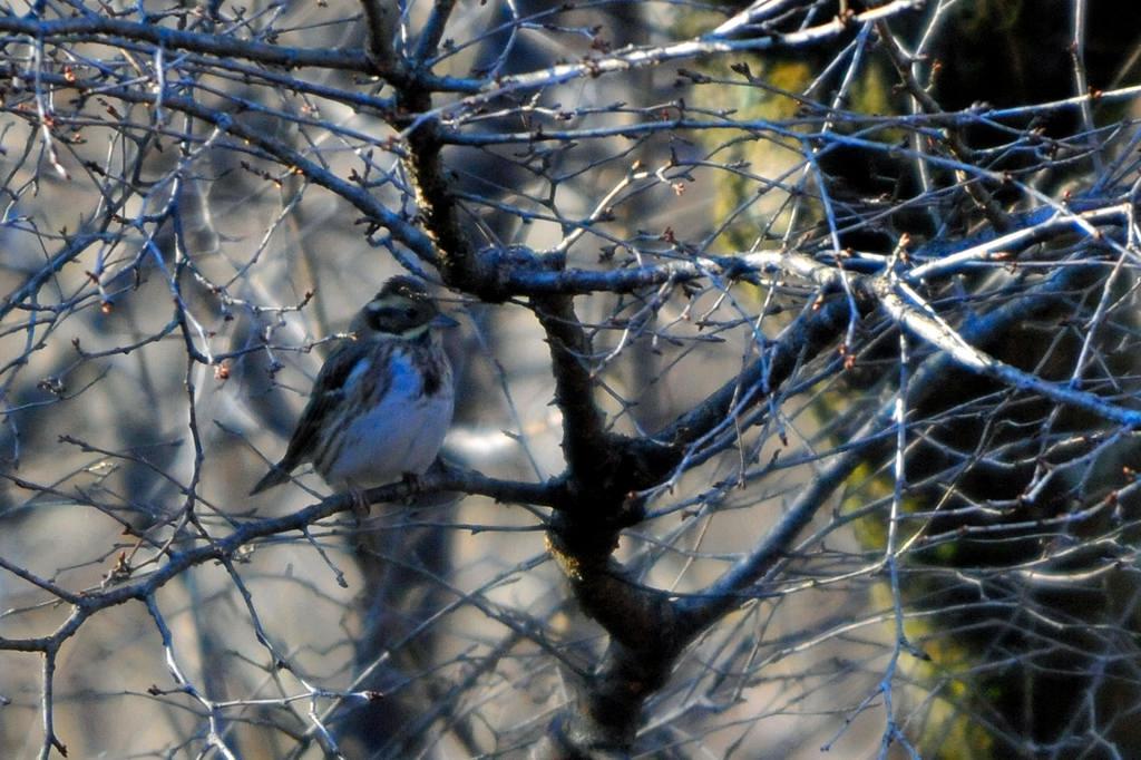 眉斑の黄色い鳥/冬至でした_b0024798_5472515.jpg