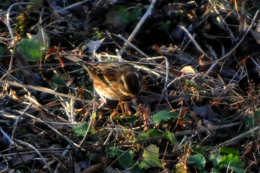 眉斑の黄色い鳥/冬至でした_b0024798_5474997.jpg