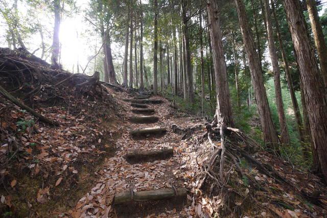 岩湧山 きゅうさかの道_e0214805_781625.jpg
