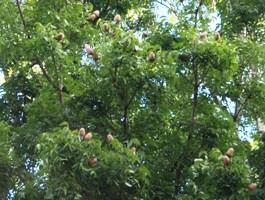 この木なんの木?_a0043520_10304740.jpg