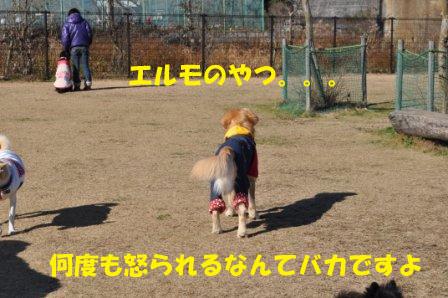 f0176830_1554047.jpg