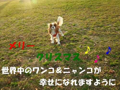 b0165139_20545078.jpg