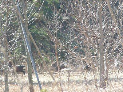 鹿の群れに遭遇_f0019247_152579.jpg
