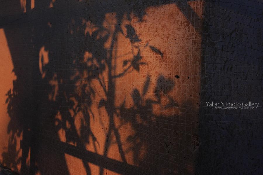 左官職人さんの手仕事 ~白壁の土蔵、日暈編~ 5月(年末年忘れUP)_b0157849_923336.jpg