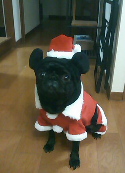 メリークリスマス_e0206358_23484514.jpg