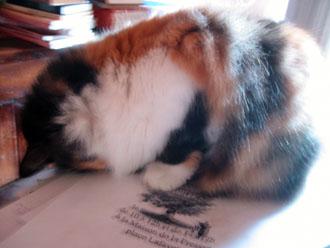 夫の実家の猫と町_a0155362_18244640.jpg