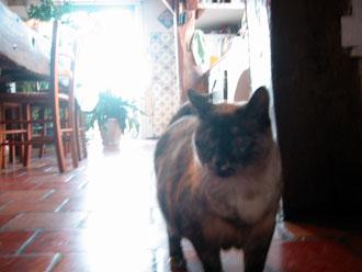夫の実家の猫と町_a0155362_182530100.jpg