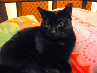 夫の実家の猫と町_a0155362_1826228.jpg