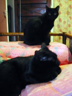 夫の実家の猫と町_a0155362_18264654.jpg