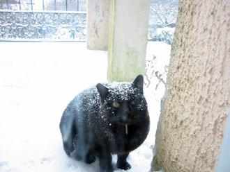 夫の実家の猫と町_a0155362_18272077.jpg