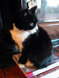 夫の実家の猫と町_a0155362_18283156.jpg