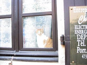 夫の実家の猫と町_a0155362_21512473.jpg