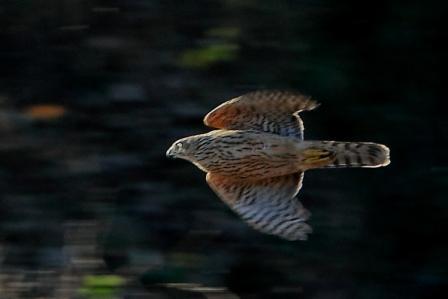 ★先週末の鳥類園(2010.12.18~19,23)_e0046474_12502955.jpg