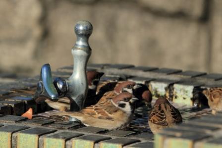 ★先週末の鳥類園(2010.12.18~19,23)_e0046474_12504366.jpg