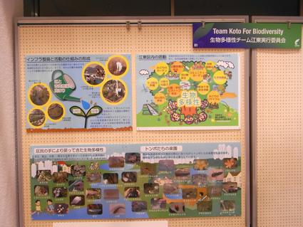 ★生物多様性チーム江東の報告会_e0046474_1534241.jpg