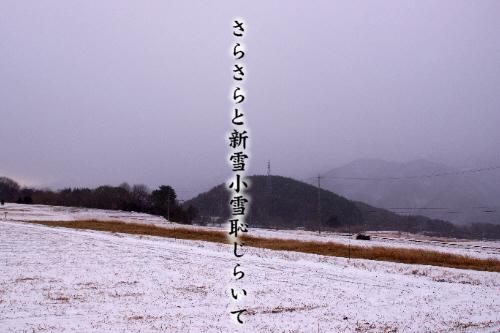 新雪_e0099713_20513517.jpg