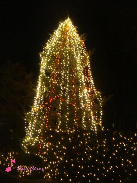 Merry Christmas_f0230127_0405219.jpg