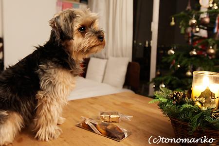 バブー家のクリスマス_c0024345_18192055.jpg