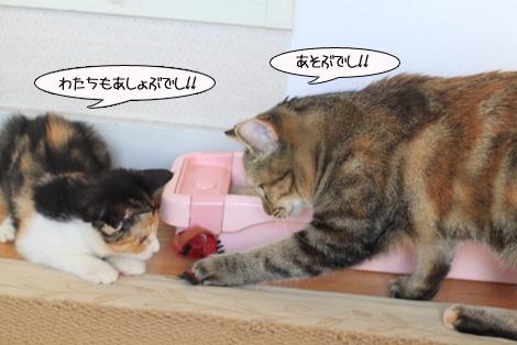 福猫は誰だ?_e0151545_2243385.jpg