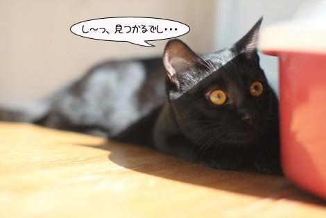 福猫は誰だ?_e0151545_23135216.jpg