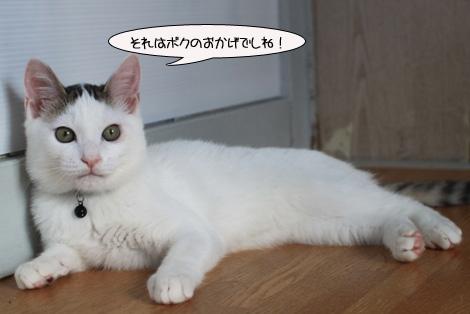 福猫は誰だ?_e0151545_23214374.jpg