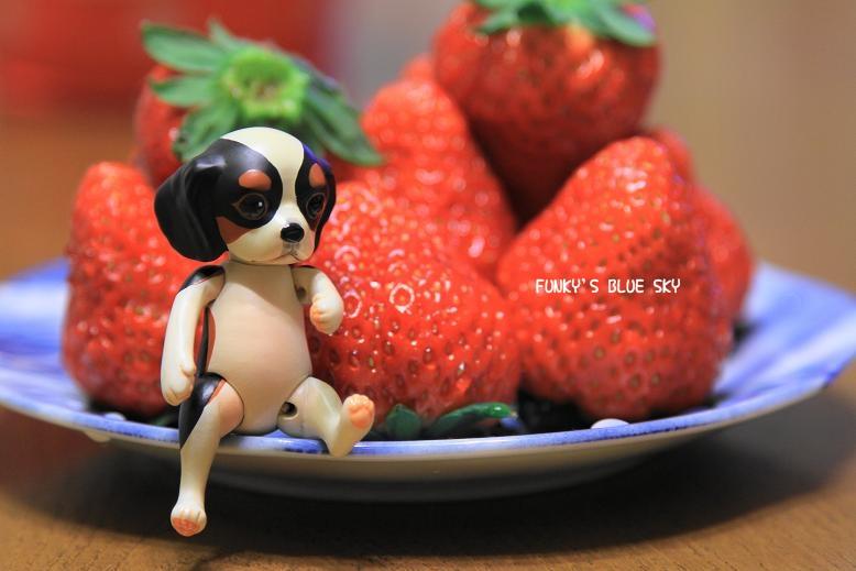 小さな小さなキャバリア【ミニコ】登場~♪_c0145250_104447.jpg