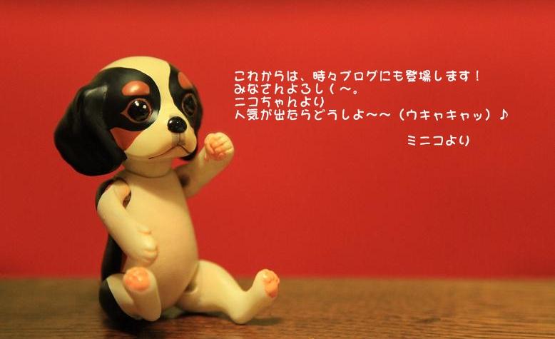 小さな小さなキャバリア【ミニコ】登場~♪_c0145250_1122028.jpg