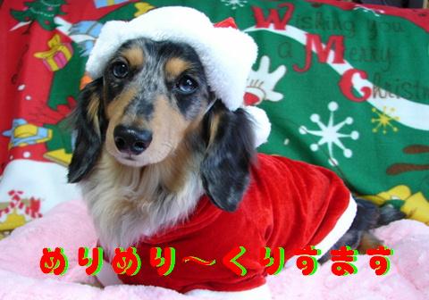 ちくわのクリスマス_f0195891_21255938.jpg