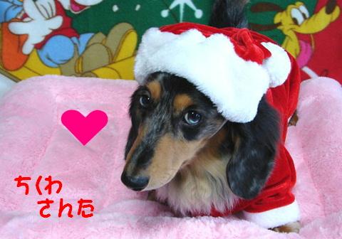 ちくわのクリスマス_f0195891_21264970.jpg