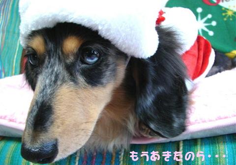 ちくわのクリスマス_f0195891_21271699.jpg