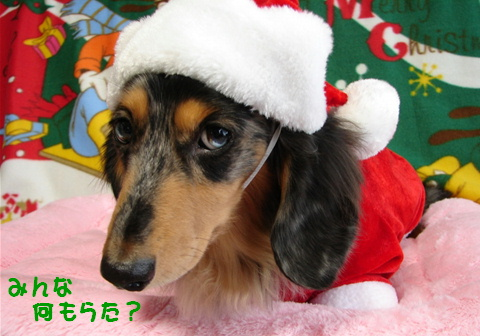 ちくわのクリスマス_f0195891_21294327.jpg