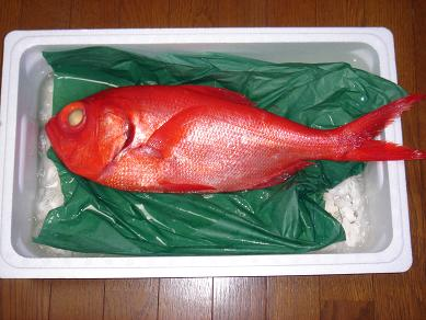 ★赤い鯛だぁー★_e0147297_1134530.jpg