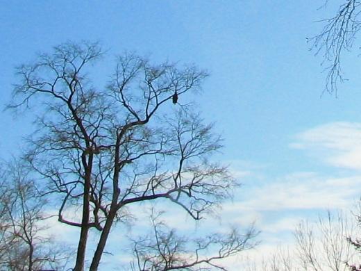 2010年12月26日(日):2010年最後の日曜日_e0062415_16585226.jpg