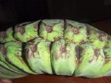 バナナの味くらべ・パート4_a0043520_1058236.jpg